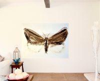 butter-butterfly
